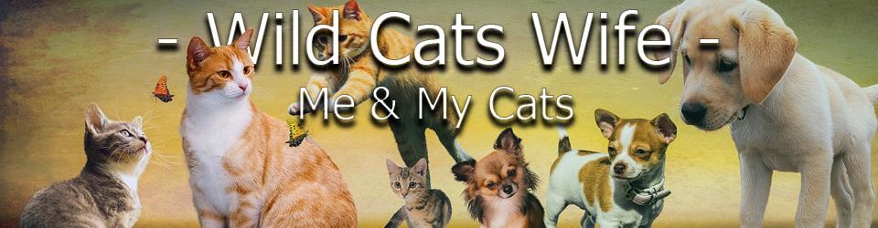 Wild Cats Wife